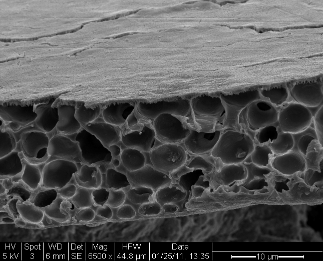 Cross-section of biodegradable film. Image credit: UCSF